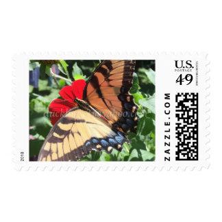 sello amarillo de la mariposa de la cola del trago