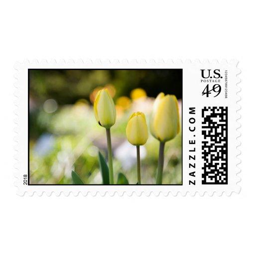 Sello amarillo de los tulipanes