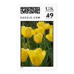 sello amarillo del tulipán