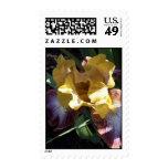 sello Amarillo-y-púrpura del iris
