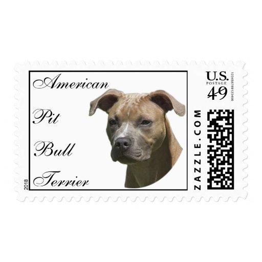Sello americano de Terrier (APBT) de pitbull