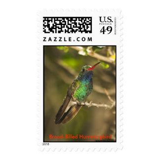 Sello Amplio-Cargado en cuenta del colibrí