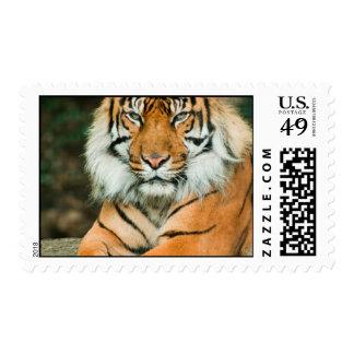 Sello anaranjado del tigre