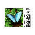 Sello azul de la mariposa de Morpho