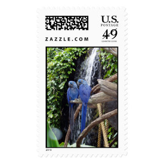 Sello azul de los macaws