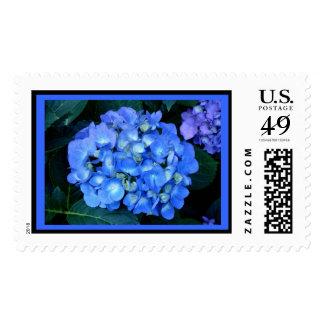 Sello azul del Hydrangea