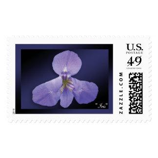 """Sello azul marino del """"iris"""" -"""