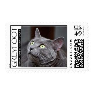Sello azul ruso del rescate del gato de Greyfoot