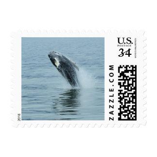 Sello - ballena que viola el agua