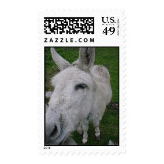 Sello blanco de la mula