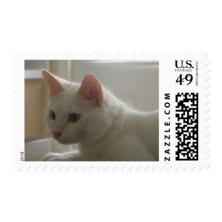 Sello blanco del gatito