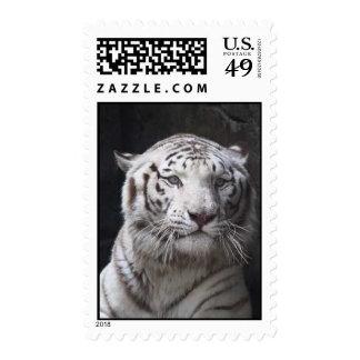 Sello blanco del tigre