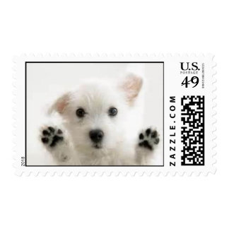 Sello blanco lindo del perrito