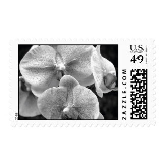 Sello blanco y negro de la orquídea
