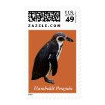Sello blanco y negro lindo del pingüino de Humbold