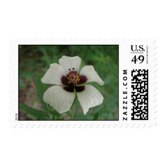 Sello blanco y púrpura del Passionflower