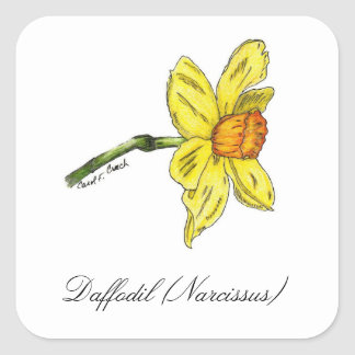 Sello botánico del narciso (narciso) pegatina cuadrada