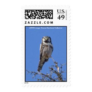 Sello/búho de halcón septentrional envio