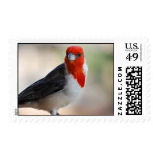 Sello cardinal inusual