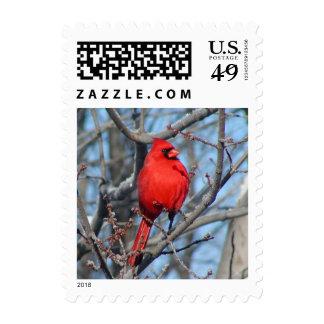 Sello cardinal rojo