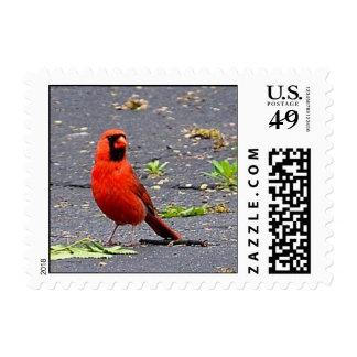 Sello cardinal