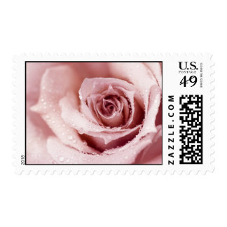 Sello color de rosa mojado rosado hermoso