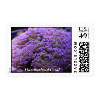 Sello coralino del Hammerhead