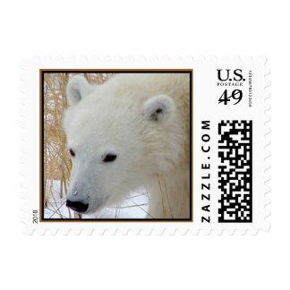 Sello de Cub del oso polar (PEQUEÑO)