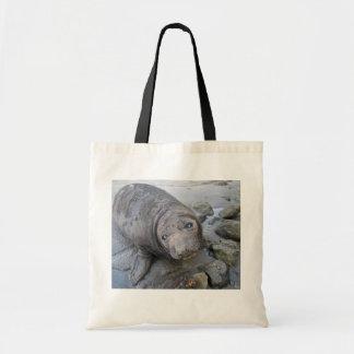 Sello de elefante septentrional joven bolsas