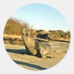 Sello de elefante septentrional, varón adulto pegatina redonda