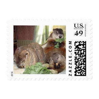 Sello de Groundhogs del mascota