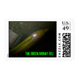 ¡Sello de la anguila de Moray