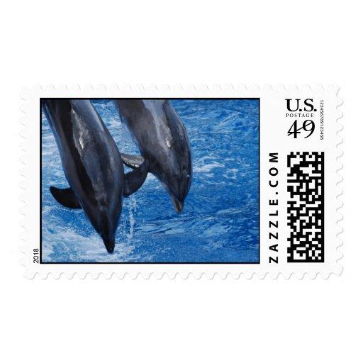 Sello de la demostración del delfín