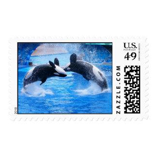 Sello de la foto de la ballena