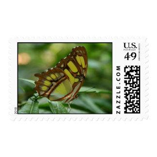 Sello de la foto de la mariposa de la malaquita