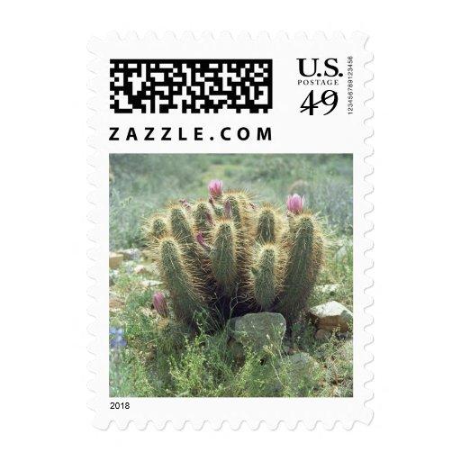 Sello de la foto del cactus de las floraciones del