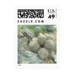Sello de la foto del cactus del remolino del Sagua