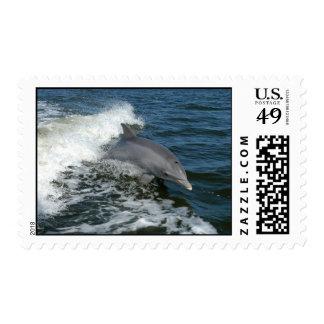 sello de la foto del delfín de bottlenose
