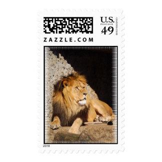 Sello de la foto del león