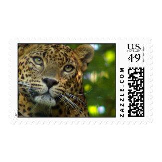 Sello de la foto del leopardo