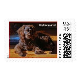 Sello de la foto del perro de aguas de Boykin