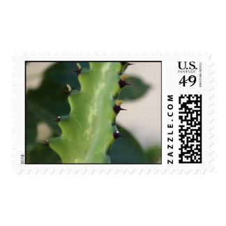 Sello de la hoja del cactus