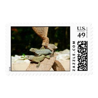 Sello de la iguana
