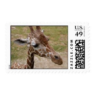 Sello de la jirafa