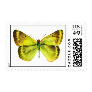 Sello de la mariposa del verde amarillo