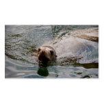 Sello de la natación tarjetas de visita