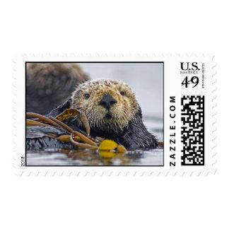 Sello de la nutria de mar de California de la