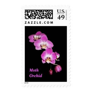 Sello de la orquídea de polilla