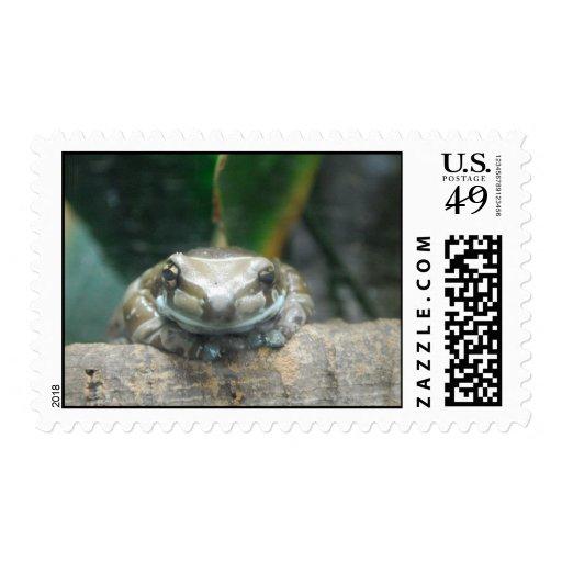 Sello de la rana de la leche del Amazonas