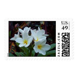 Sello de las flores blancas